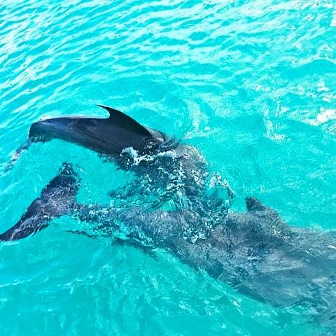 Private St John boat charters USVI BVI snorkeling dolphins
